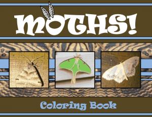 MothColoringBook