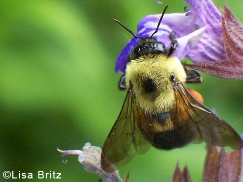PollinatorWeek_1111 copy