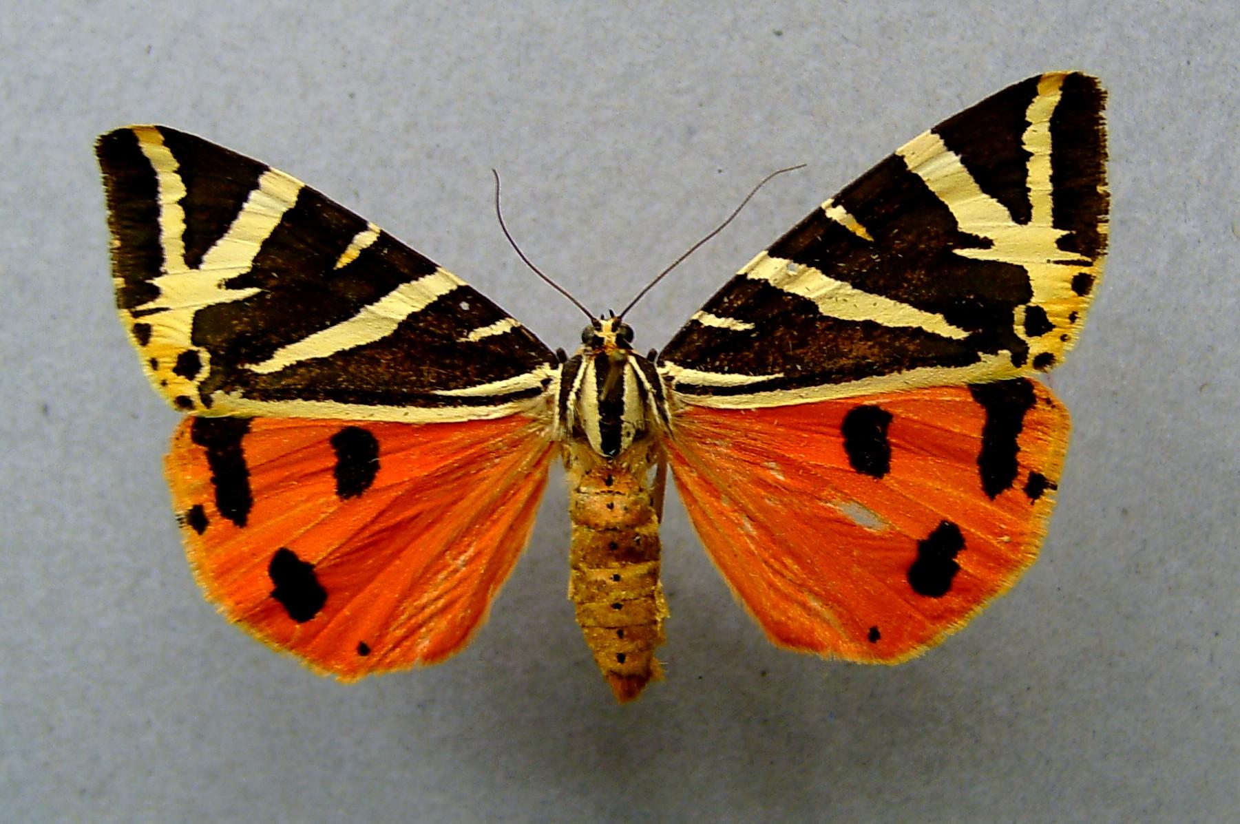 tiger moth meet 2013 nfl