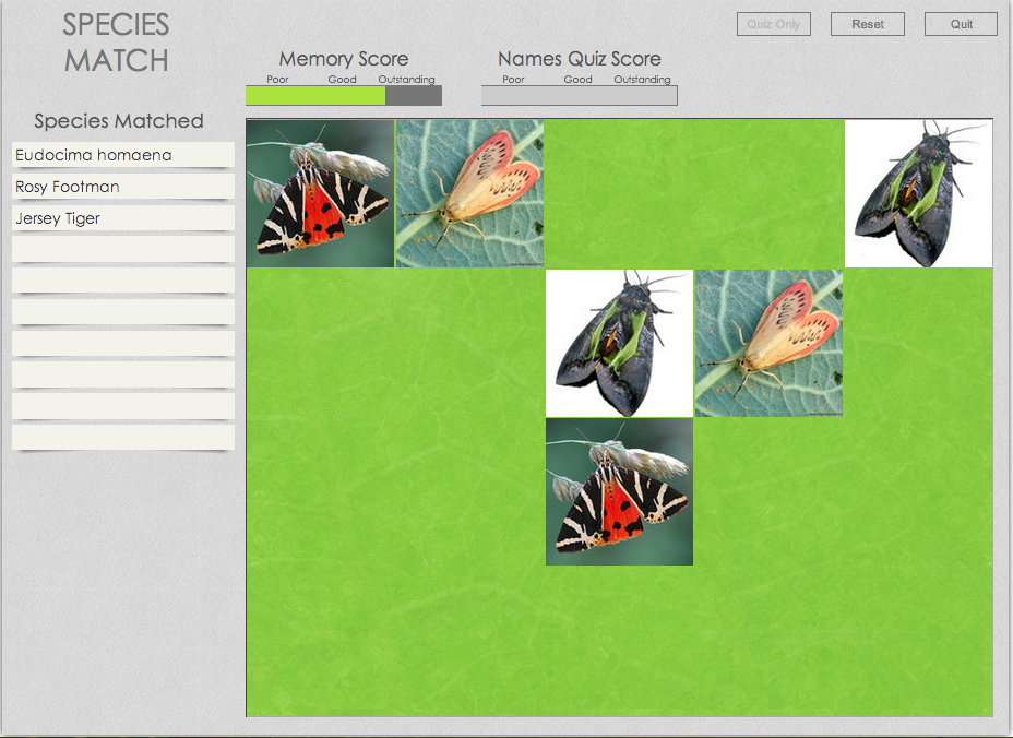 EOL's Moth Memory Game