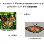 What is a moth