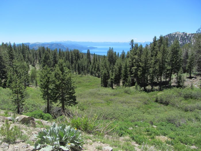 View of Lake Tahoe from the trail the Sierra Club will be hiking next week to look for moths in celebration of National Moth Week. (credit: Yvonne Jerome)