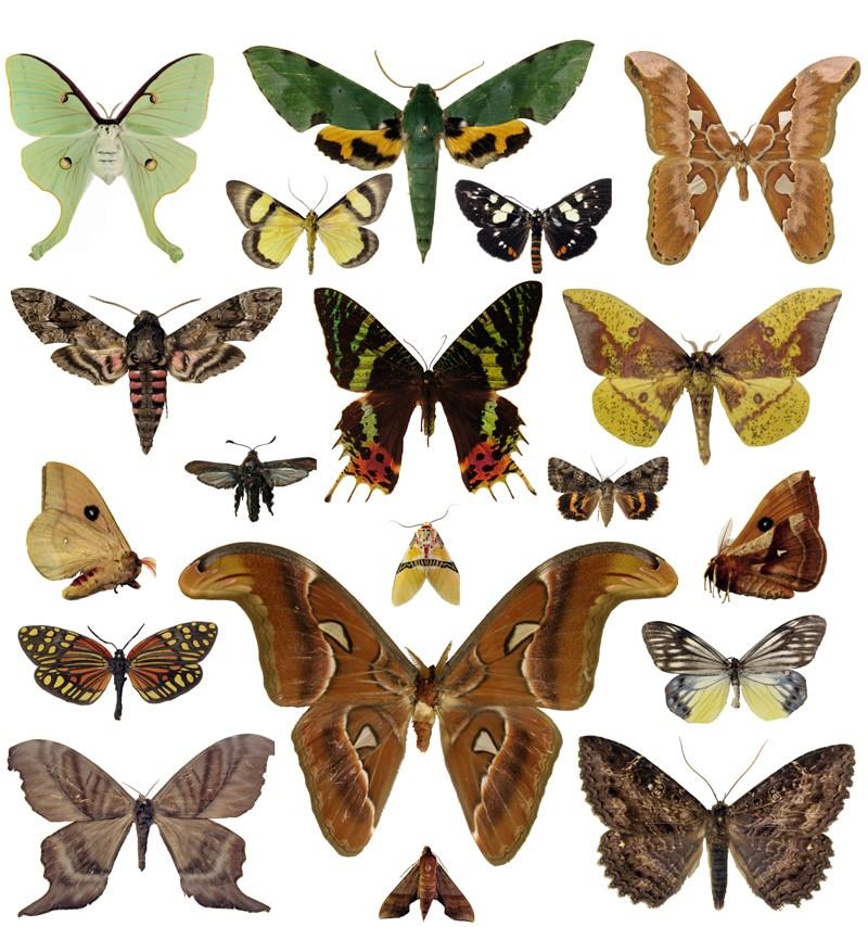 bioquip moth special