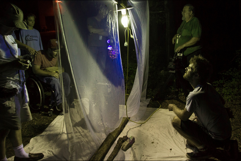 Observing the moth sheet. Photo courtesy of Stockton Flickr site.