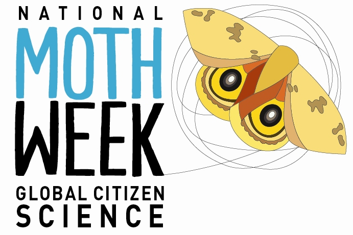 Color Moth Pictures | National Moth Week