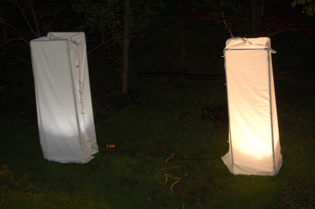 The moth setup we are using for our experiment. Photo by Katherine Bardsley and Anjali Nambrath.