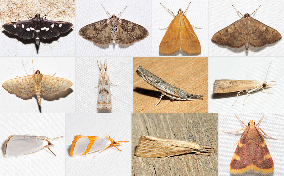 Just a few of the moths Ken photographed. Check out his album linked below for many more. (c) K. Childs