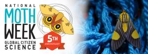 National Moth Week is celebrated globally this week - 23-31 July 2016