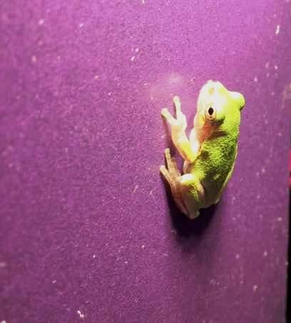 Lenora Larson Tree Frog