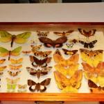 Rentz-5 moth tray