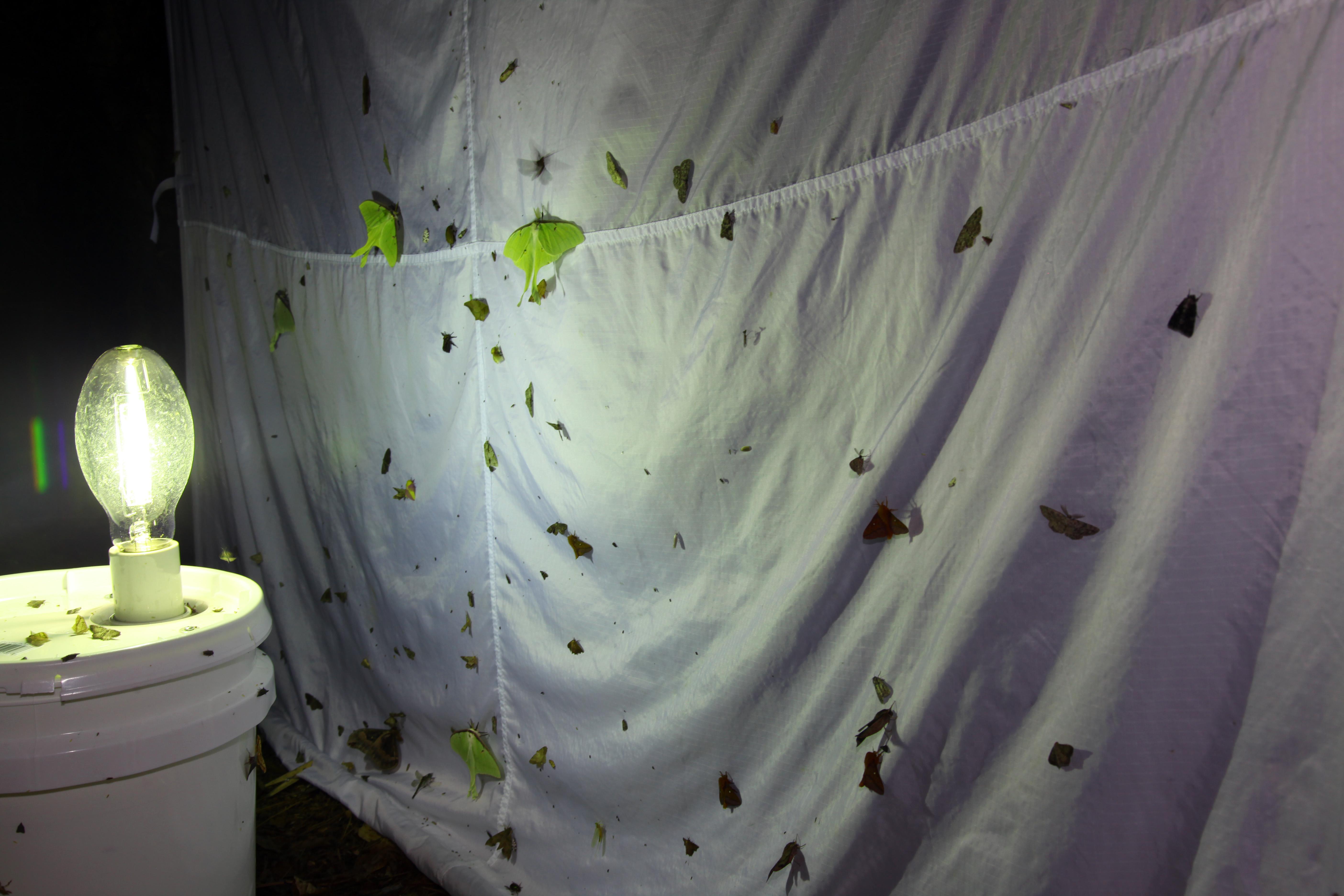 Tent#3