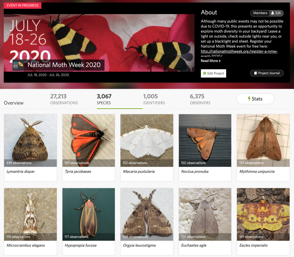Panel of moths from the National Moth Week 2020 project on iNaturalist.