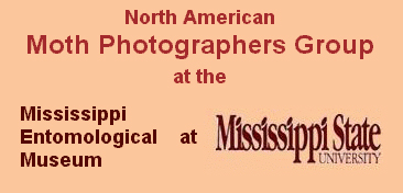 Moth Photographers Group (MPG)