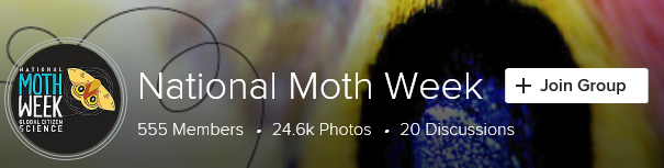 National Moth Week Flickr group