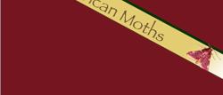 African Moths