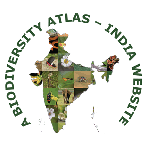 Moths Of India